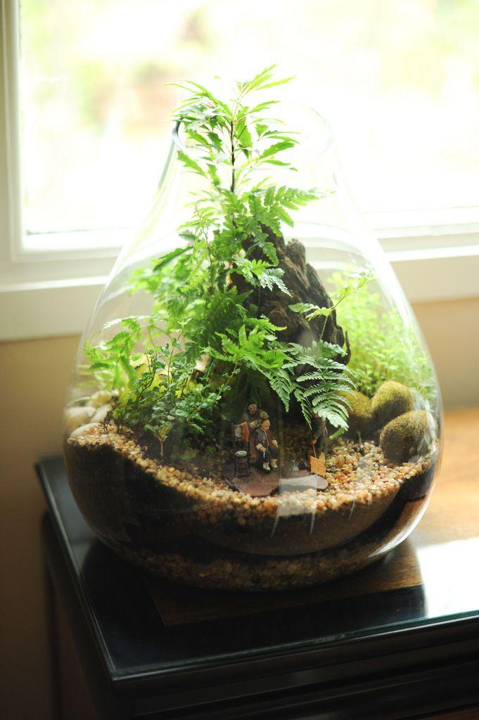 17 Best images about terrarium on Pinterest   Terrarium ...