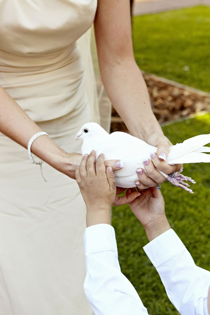 Handing this dove, a symbol of love hope & spirit to my beautiful Jakob was so special