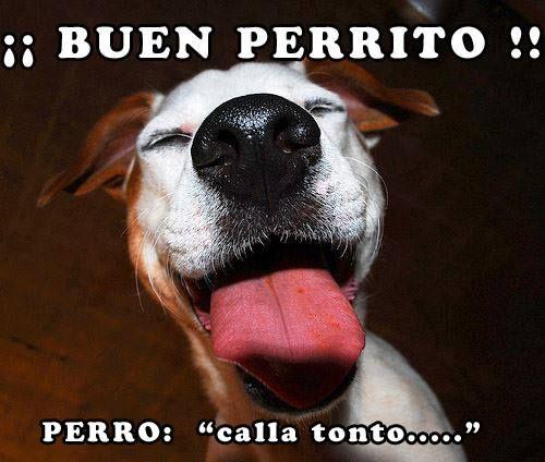 El mejor perrito del mundo!! https://soyunperro.com/