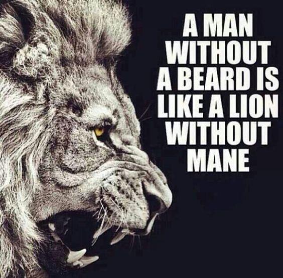 A man without a beard is like a lion without mane From beardoholic.com