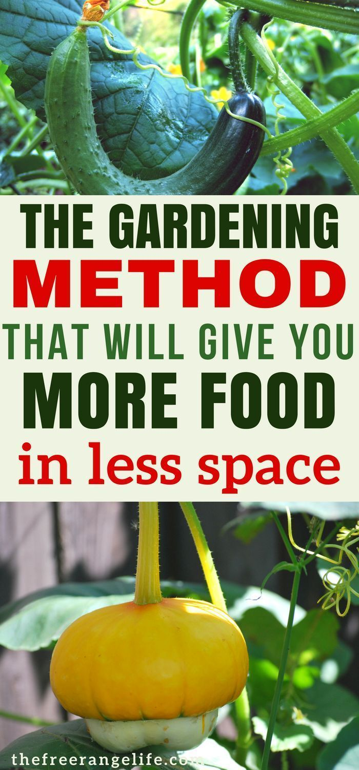Vertical Gardens: Learn all about how to grow vertically in your vegetable garden! Grow more food in less space | Organic Gardening Tips | How to Grow | Gardening for Beginners #gardeningvegetables #vegetablegardening