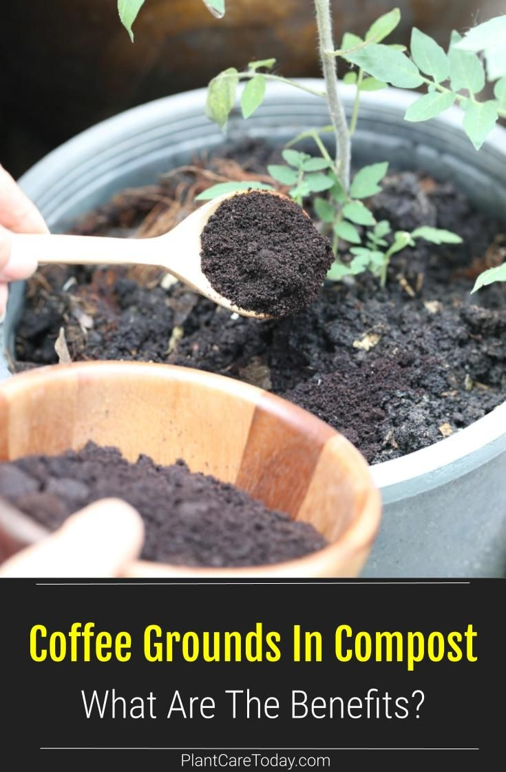 Coffee Grounds In Compost What Are The Benefits Coffee Grounds Garden Compost Compost Soil