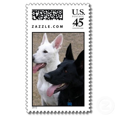 white and black German Shepards