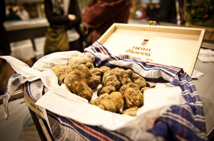 HOW AND WHERE: THE WHITE TRUFFLE OF ALBA #white #truffle #alba #piedmont #tartufo #bianco #alba