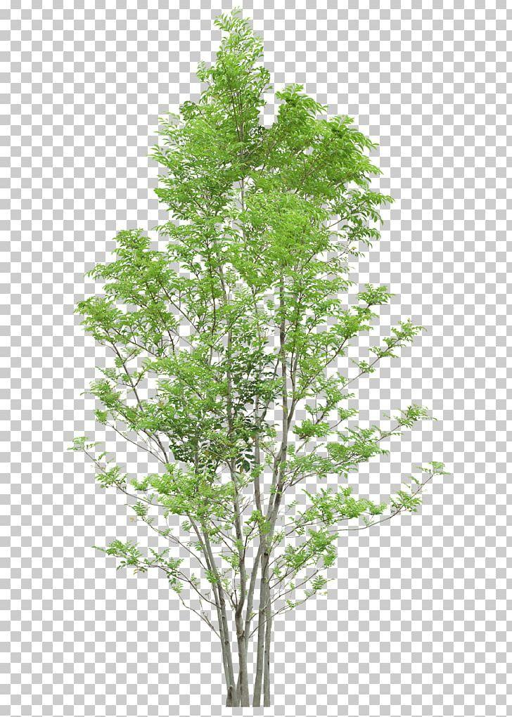 Tree Png Autumn Tree Branch Christmas Tree Data Diagram Tree Photoshop Tree Textures Photoshop Landscape