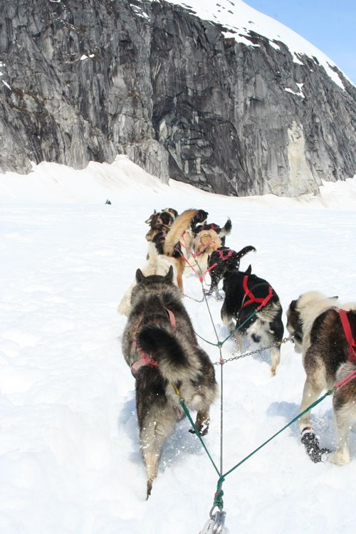 Alaska Cruise Excursion!@  How Cool is this, to actually be pulled by Alaska Huskies in Alaska when taking a CRUISE! WOW! Looks fun and beautiful!