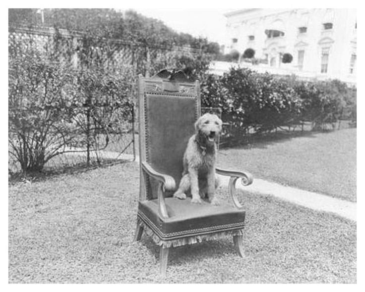 75 best Warren G Harding images on Pinterest | American history ...