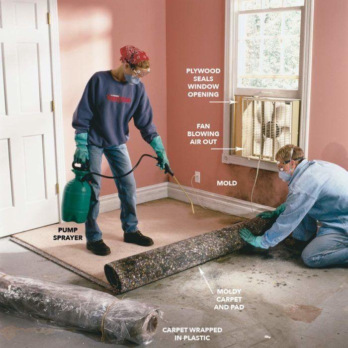 378eb60a225541161a6af5f9cfd01df4 - How To Get Rid Of Mold Out Of Carpet