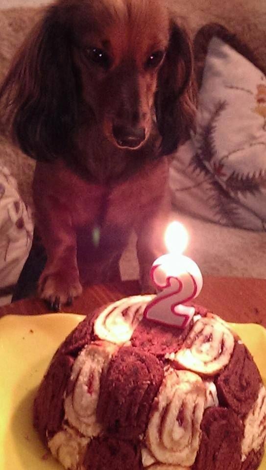 Happy 2-nd birthday, Lily (via Gustav's friends)