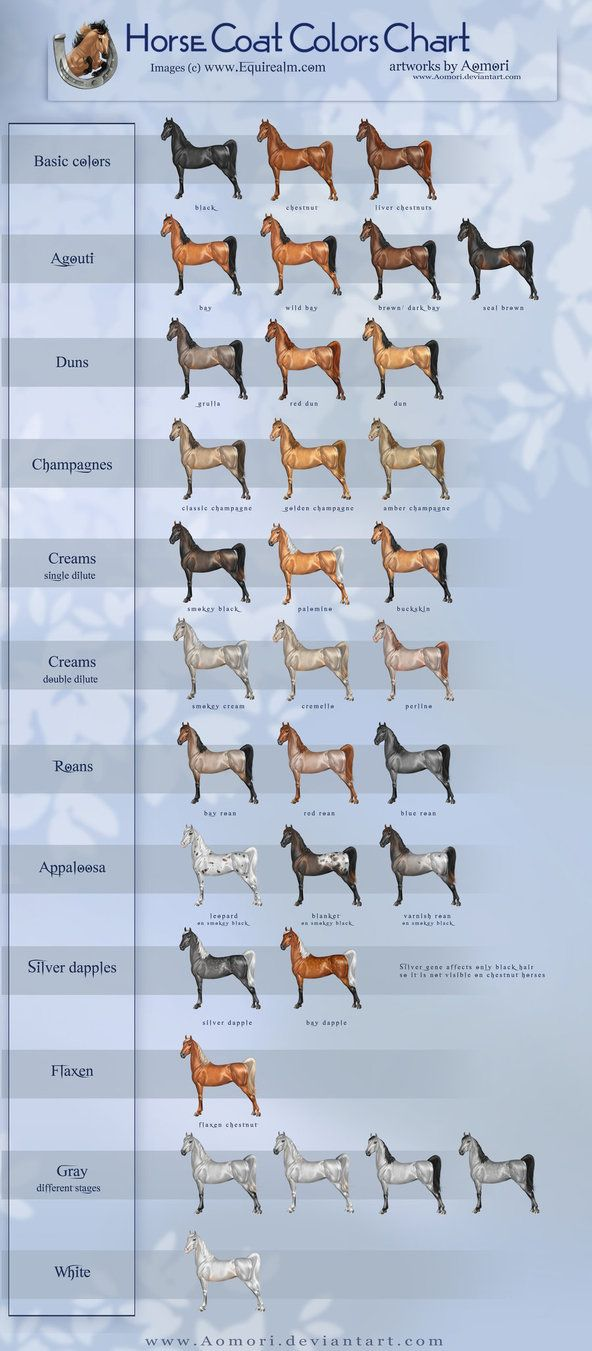 deviantART: More Like Chestnut Color Genetics Chart by ~MagicWindsStables