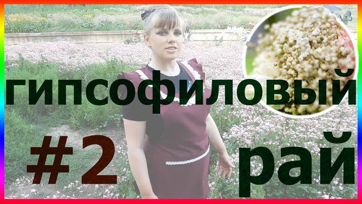 Гипсофиловый рай #2. ГИПСОФИЛА выращивание посадка уход вредители болезн...