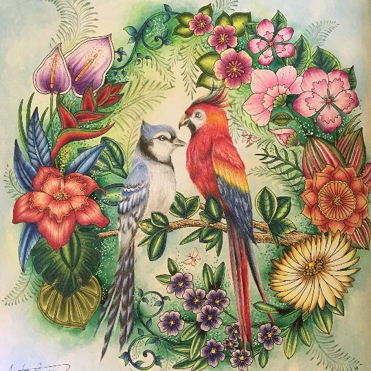 949 Best Images About Johanna Basford Magical Jungle On Pinterest