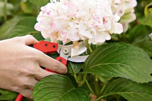 Autumn Gardening Tips to revitalize your garden for the new season