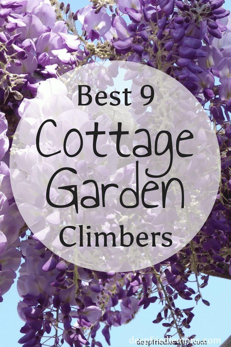Cottage Garden Climbers Climber Plants Vine Trellis