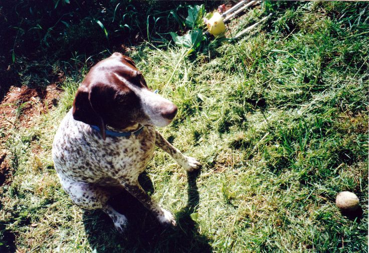 After my dog Chelsea died I waited 3 years before deciding to bring another dog…