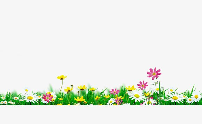 Flowers In Full Bloom Natural Environment Spring Green Grass Png Transparent Clipart Image And Psd File For Free Download Ilustracao De Flor Flores De Juta Flores