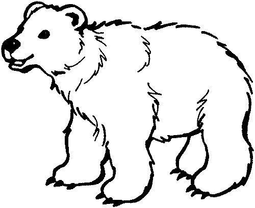 """Képtalálat a következőre: """"medve rajzok"""""""