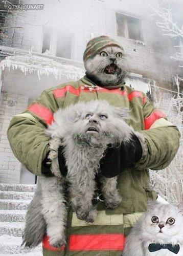 Fireman & Cat Face Swap