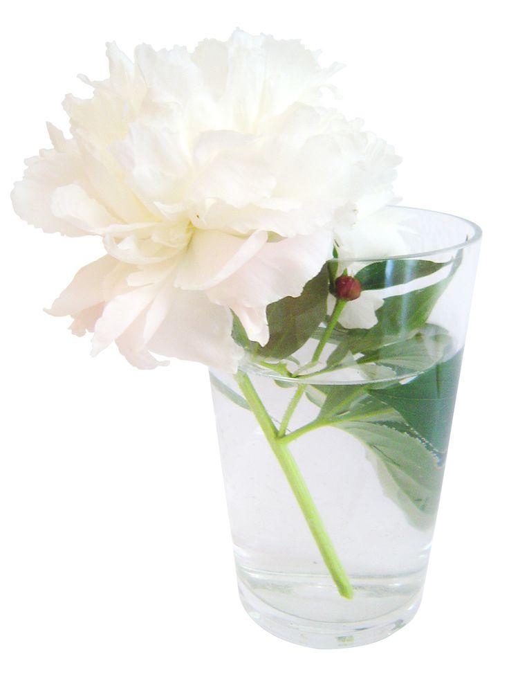 Receta de alimento para flores cortadas