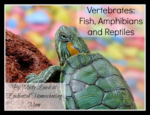 Amphibians: Why Study Them?