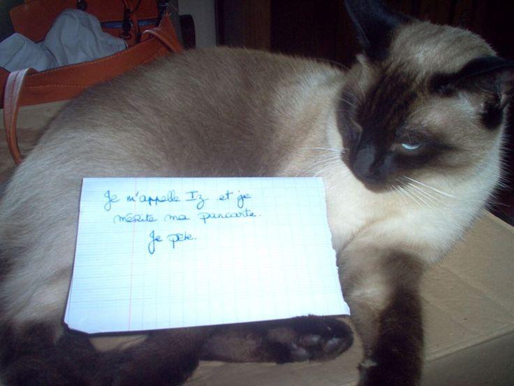 « My name is Iz and I deserve my shame photo: I fart. » #lolcats #shameyourpet #shameyourcat #cat #cats #chats