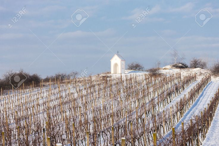 Winter Vineyard Near Hnanice, Southern Moravia, Czech Republic ...