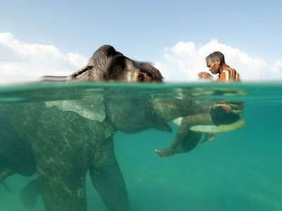 Nazroo, the 58 years old gentleman and Rajan, the 60 years old elephant both live at Radha Nagar Beach in Havelock, Andaman Islands. They've been best friends for decades.