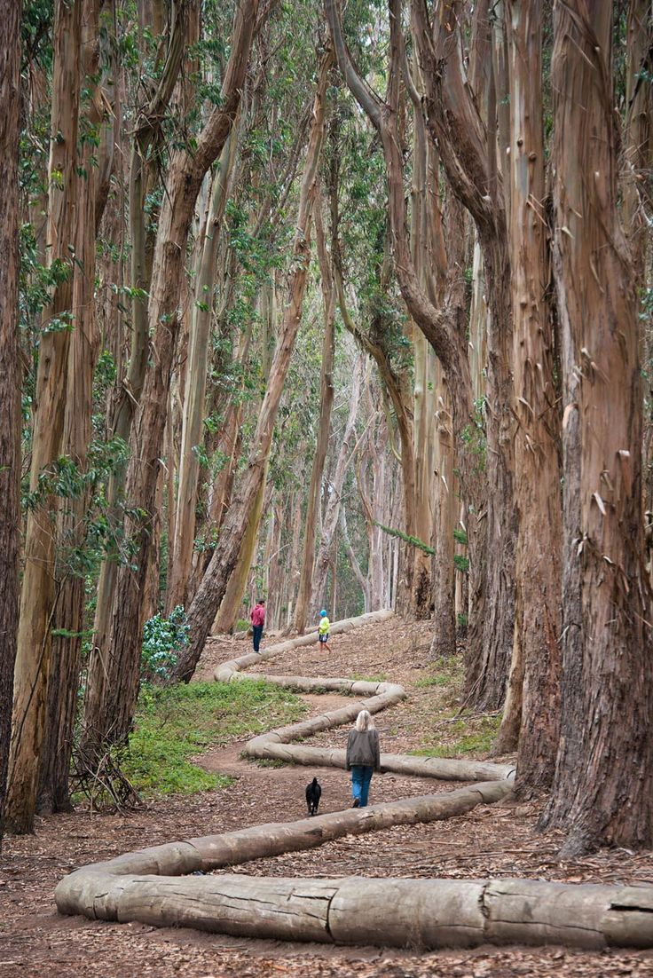 "Walking the ""Lover's Lane"" trail and Wood Line in the Presidio National Park. San Francisco 