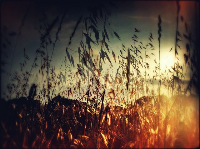 And the living is easy by Elena iPhoneography, via Flickr #doubleexposure #nature #sunset