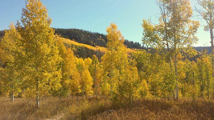 Fall colors at Vista Verde Ranch Colorado
