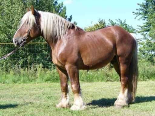 Magyar lófajták