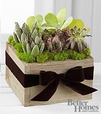The FTD Succulent Dishgarden by Better Homes and Gardens
