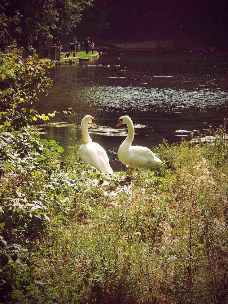 My Fotolog: Ducky, Paradis Express, Lakes, Action, Fotolog, Feathers, Birds