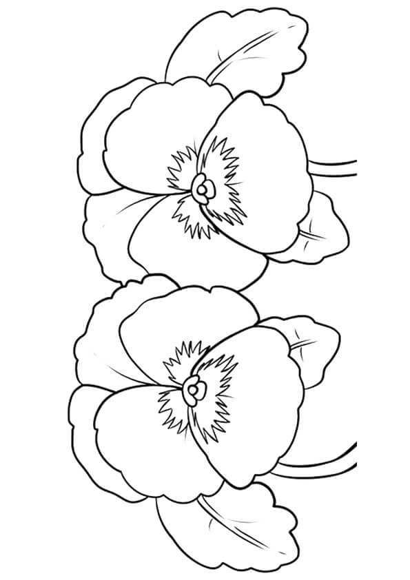 Various Type Of Flower Coloring Pages Flower Coloring Pages