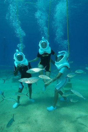Sea trek with Cabo Expeditions