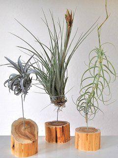 indoor g rten ganz ohne erde deko pinterest indoor. Black Bedroom Furniture Sets. Home Design Ideas