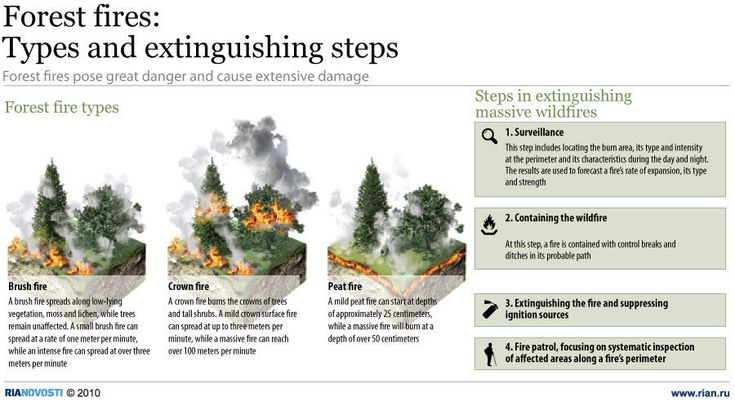 Forest fires: Types and extinguishing steps