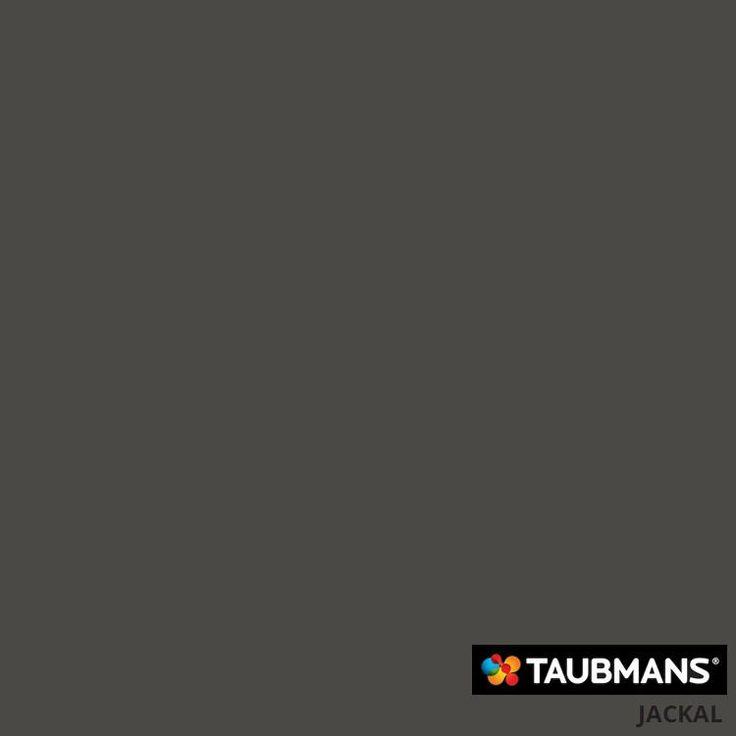 #Taubmanscolour #jackal