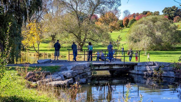 Dominion Arboretum - Ottawa by Mikell Herrick