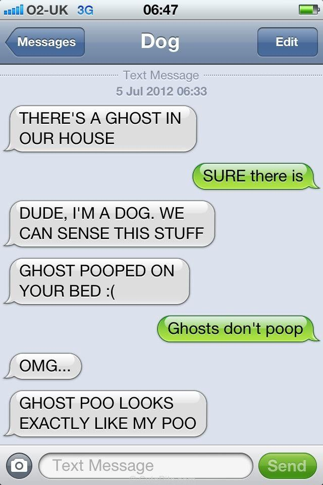Pit Bulls and Funny Dog Pictures - Theres a Ghost in our House!