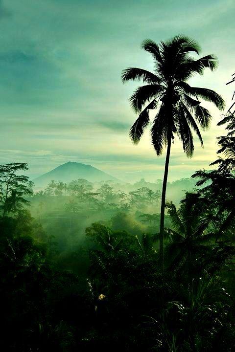 Scruter l'horizon I #Indonesie I