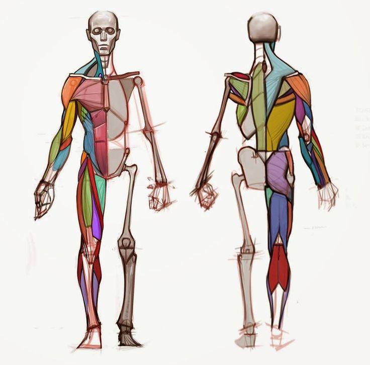 271 besten el cos humà 1 - el cuerpo humano Bilder auf Pinterest ...