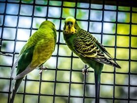 """State Fairs (Multi-State): Stop allowing """"mobile petting zoos"""" featuring parakeets, birds, and other animals as an attraction."""