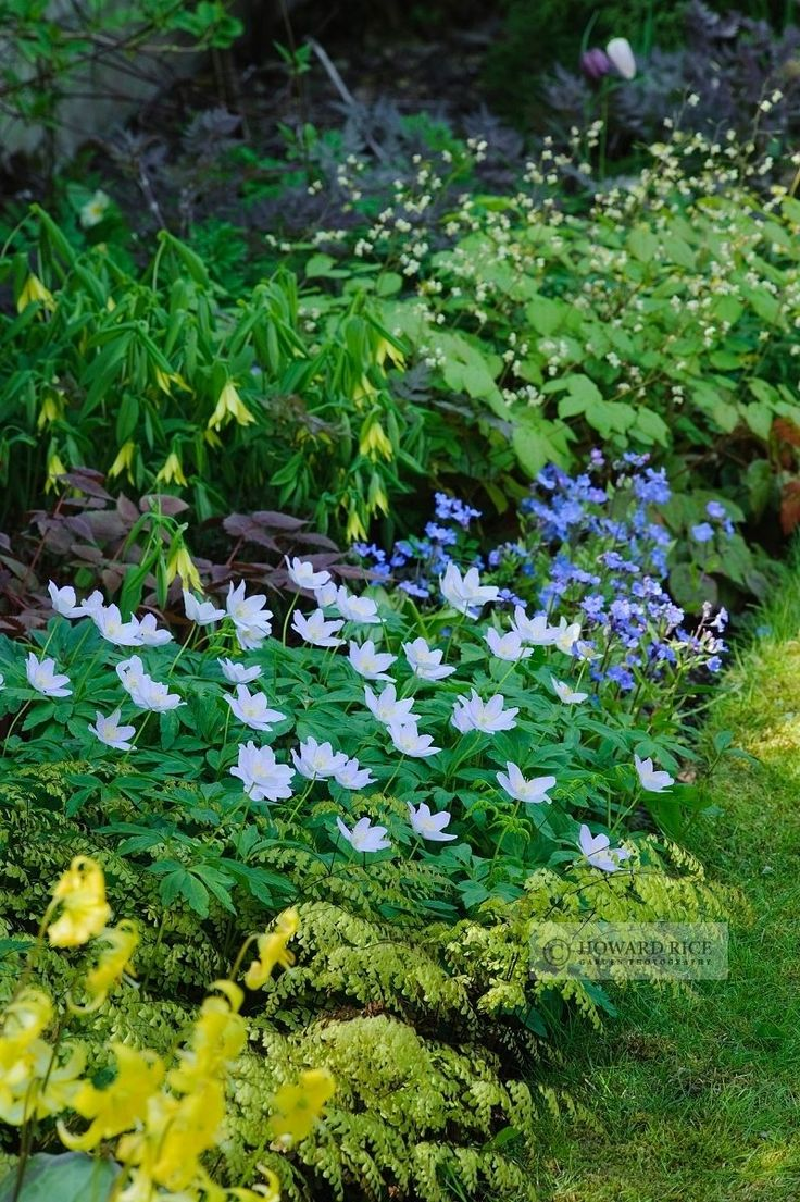 Wood anemone, Forget-me-not, Tiarella and Erythroniums. (Anemone: green in spring and summer, flowers spring, part sun, protect from slugs)