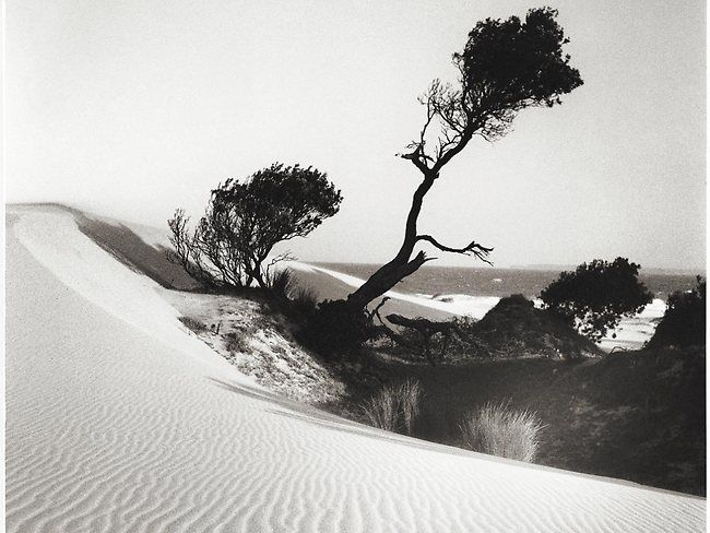 Banksias By The Sea by Max Dupain 1939. Dupain took hundreds of thousands of photographs of Sydney. Some might be more famous than this image but none are more beautiful.