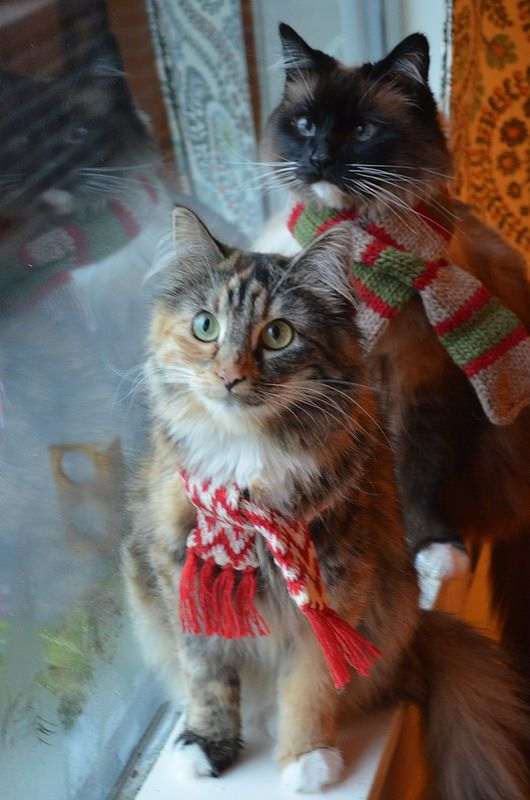 Christmas cats                                                                                                                                                                                 Más