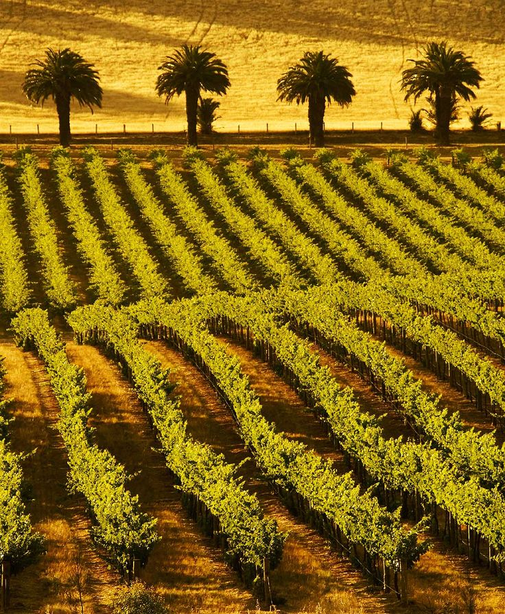 Barossa Valley, Vineyards, South Australia