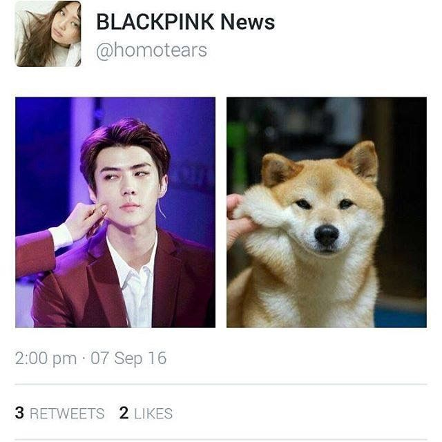 why would you post the same picture twice?? || Sehun