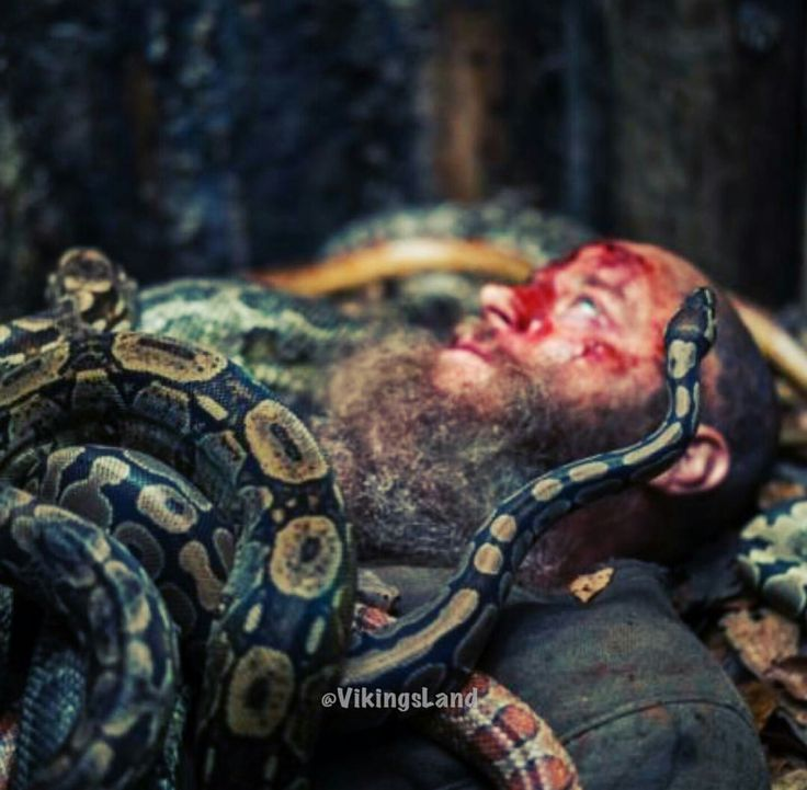 The death of King Ragnar Lothbrook . Valhalla awaits.