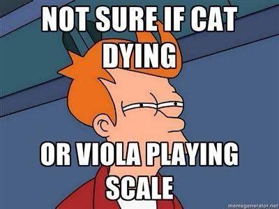 I'm sorry viola